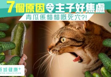 新城健康+ 貓 焦慮 青瓜