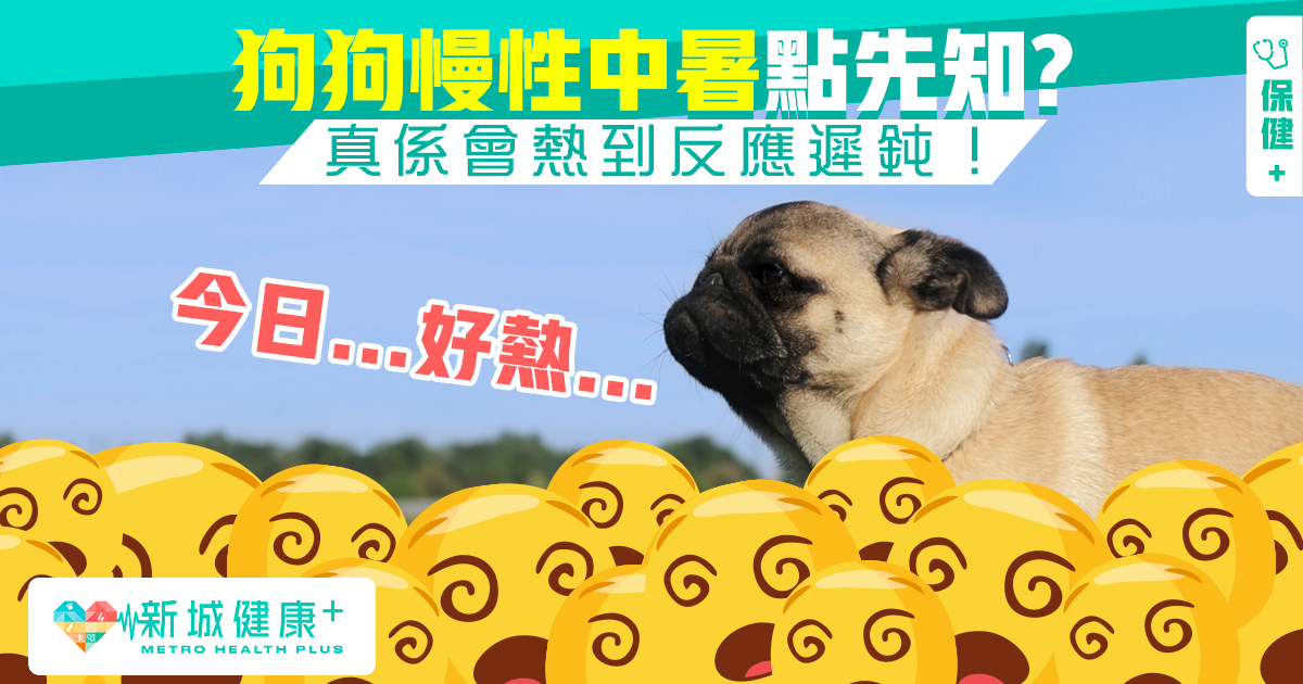 新城健康+ 狗狗 中暑
