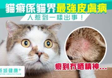新城健康+ 貓癬 皮膚病