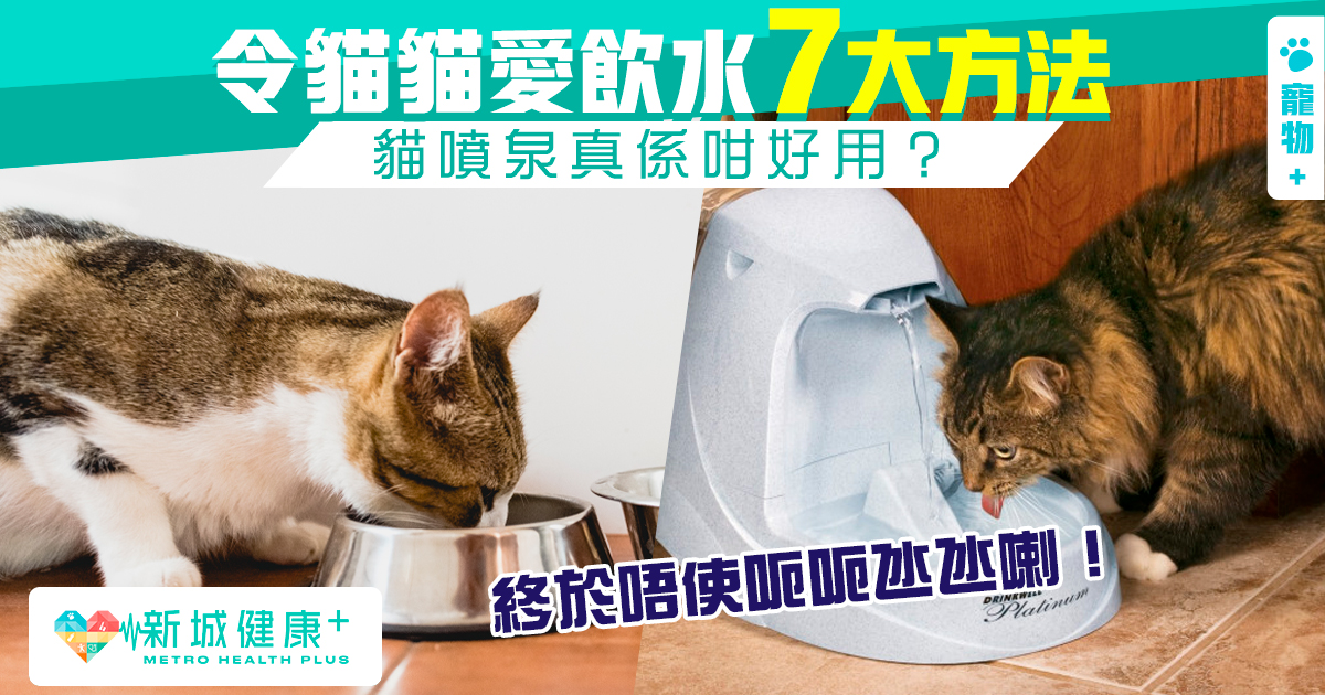 新城健康+ 貓貓 飲水